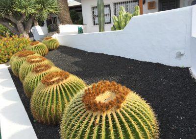 03-cactussen-spirituele-vakantie-lanzarote-canarische-eilanden