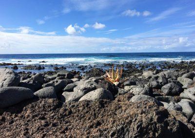 18-strand-met-cactus-spirituele-vakantie-lanzarote-canarische-eilanden