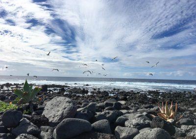 19-vogels-aan-de-kust-spirituele-vakantie-lanzarote-canarische-eilanden