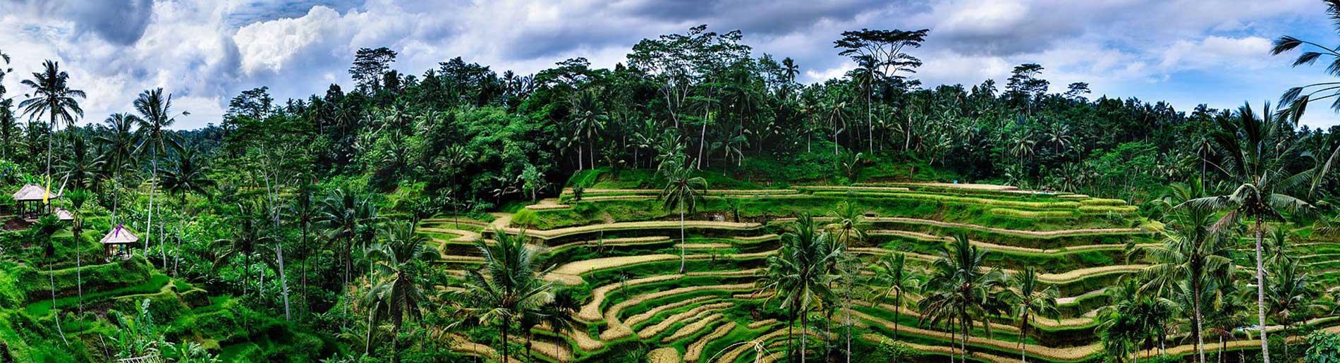 DEVINUS-reizen-rijstvelden-Tegalalang PANO