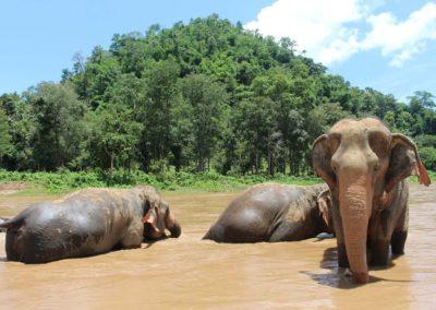 DEVINUS spirituelereis Thailand elephant-2647010_1920